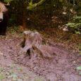 Câteva observații pe marginea Ordinului nr. 1169/2017 pentru aprobarea nivelului de intervenție în cazul speciilor de urs și lup.  Întrucât după apariția ordinului (în egală măsură neașteptat și mult […]