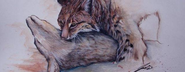 Scurtă incursiune în istoricul râsului (Lynx lynx c. L.) din Carpații României  O incursiune in literatura din ultimul secol oferă date prețioase despre principalele specii de interes din fauna […]